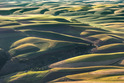 The Palouse 2013   - Washington and Idaho, USA     442-2013