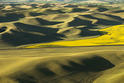 The Palouse - Washington and Idaho, USA   -2029