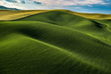 The Palouse - Washington and Idaho, USA   445-8918