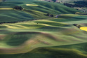 The Palouse  0441-Washington and Idaho, USA 441-1973