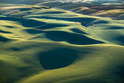 The Palouse - Washington and Idaho, USA   444-8971