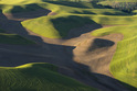 The Palouse - Washington and Idaho, USA     -2025