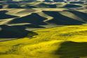 The Palouse - Washington and Idaho, USA   -2031